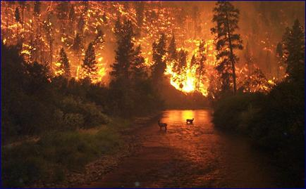 Image:Deerfire high res.jpg